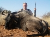 normal_jim_wildebeest