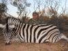 anthony-lopez-zebra-large