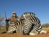 Brian Zebra (Large)