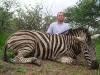 brice_zebra