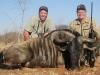 dan_blue_wildebeest