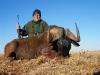 horst_black_wildebeest