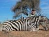 pauls-zebra-2013