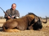 thomas_black_wildebeest