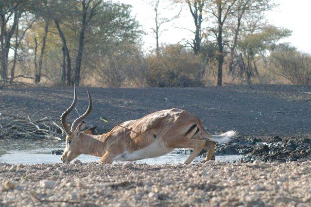Bow Hunting | Kirabo Safaris